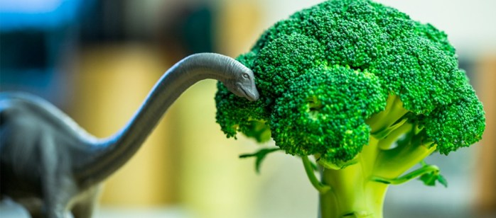 Dinosaur Tree Broccoli