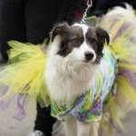 Evento para cães e seus donos terá desfile de moda e palestras