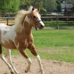 Foal Training When To Start Training A Young Horse