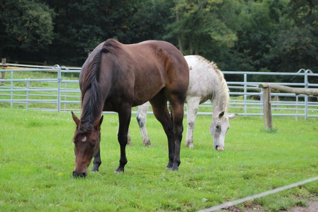 Co je pro koně odměna, motivace a jak ji používat (taky co není)