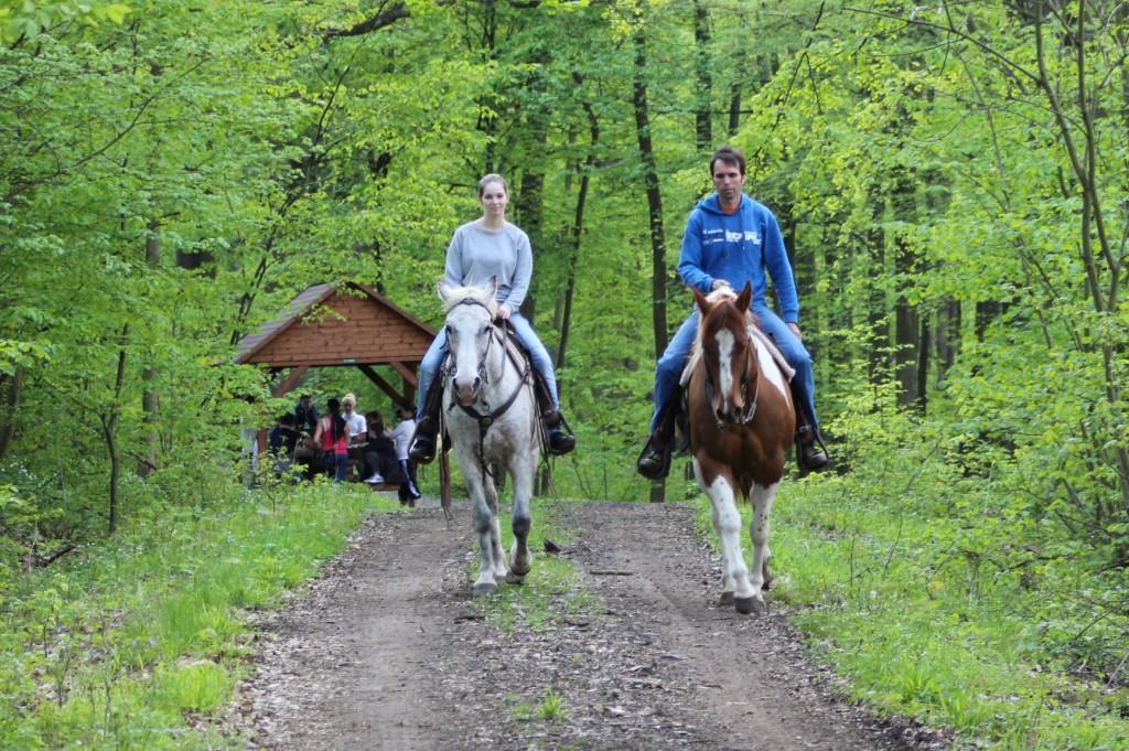 Jak koně nejlíp naučit, aby se nechtěl hnout od jiných koní