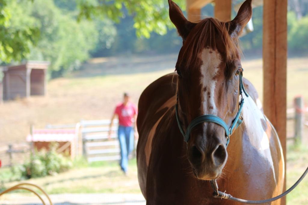 Má se kůň v kruhovce otáčet ke mně nebo ode mne?