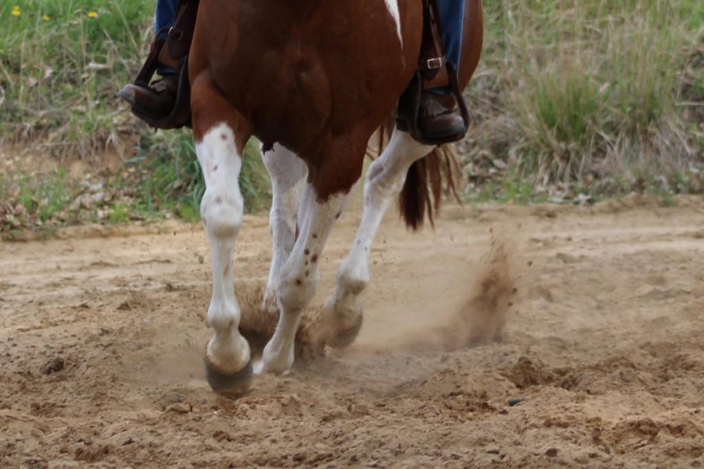 Aby kůň reagoval na jemnou pobídku