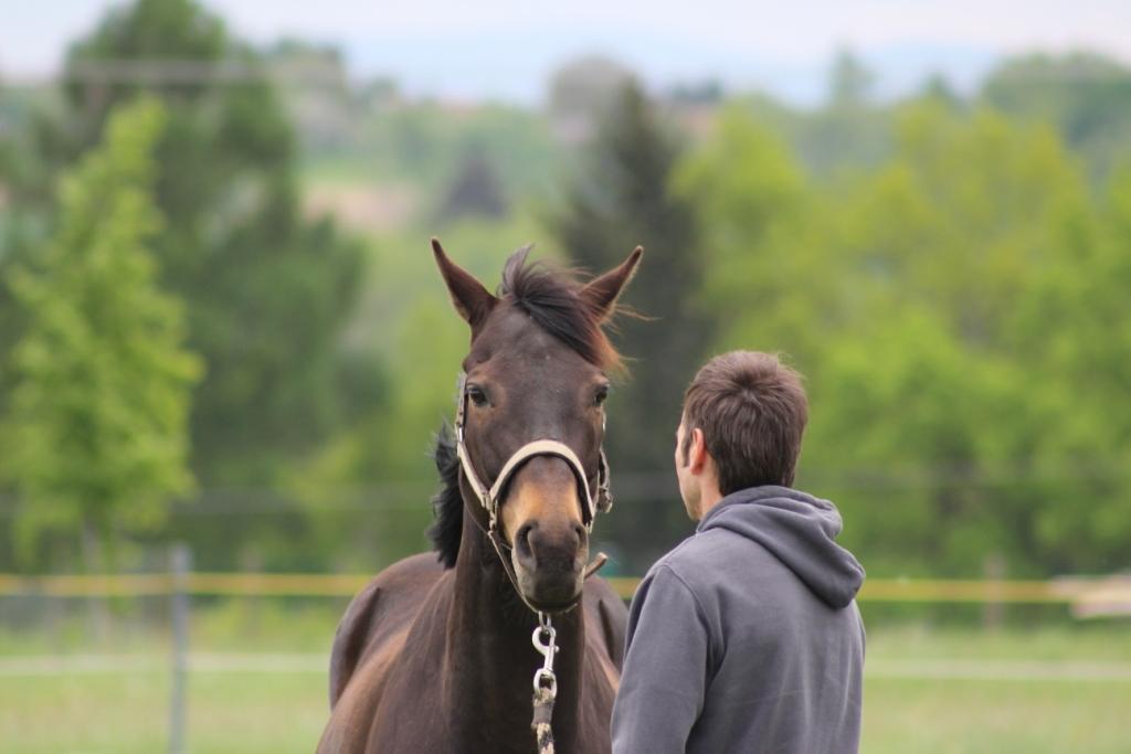 Jak kůň komunikuje