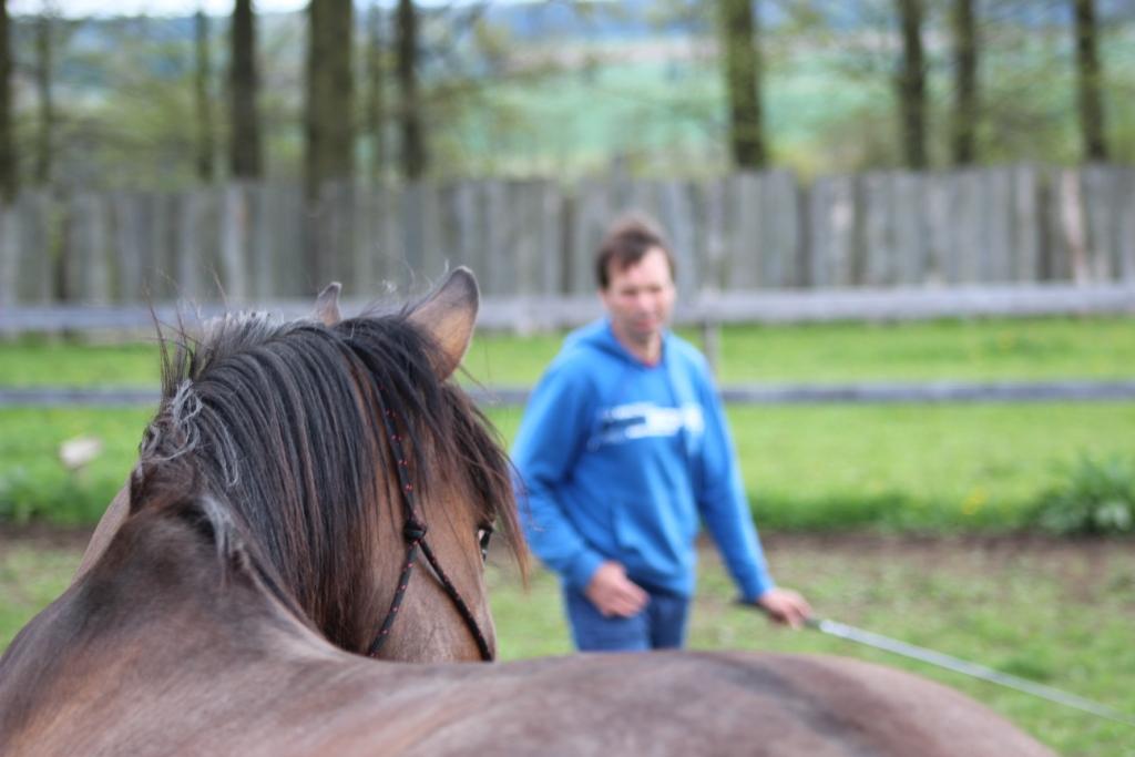 Co byste měli vědět, než s koněm začnete pracovat ze země