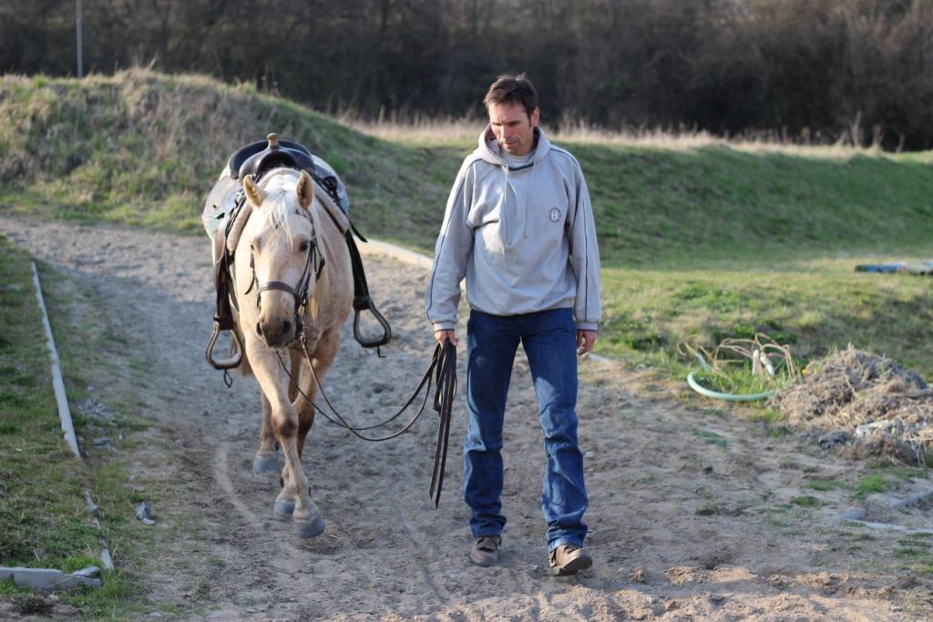 Jak vaše chování vnímá kůň a rozumí mu kůň