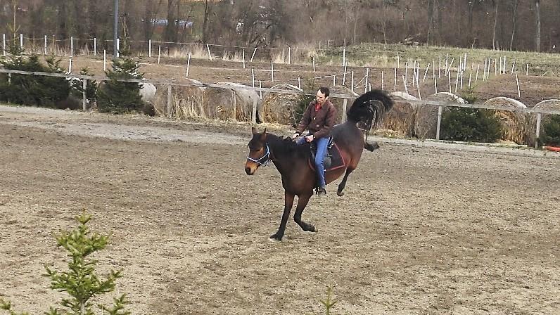 Proč kůň vyhazuje