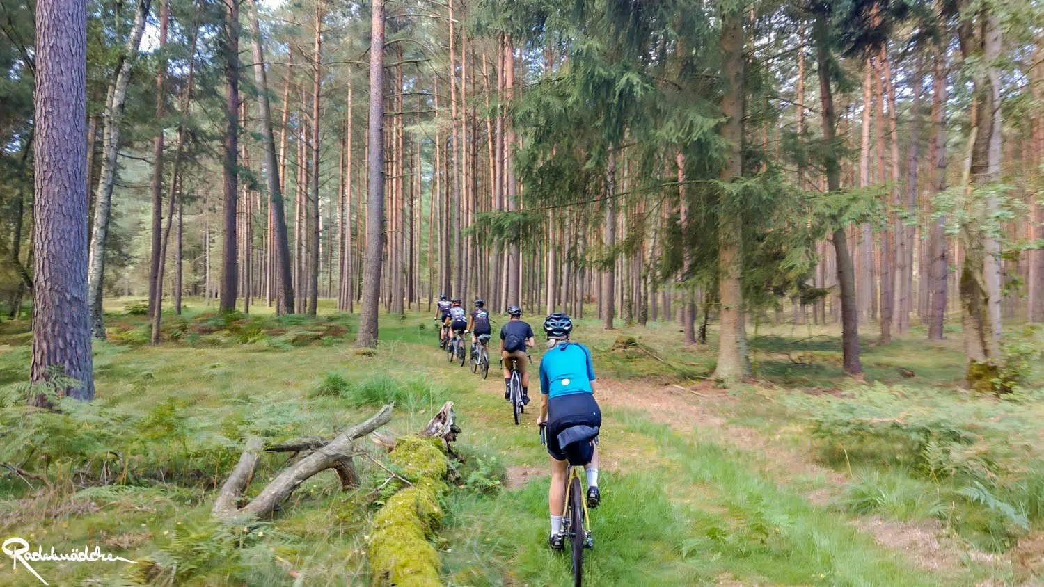 cyclists in a row in the woods