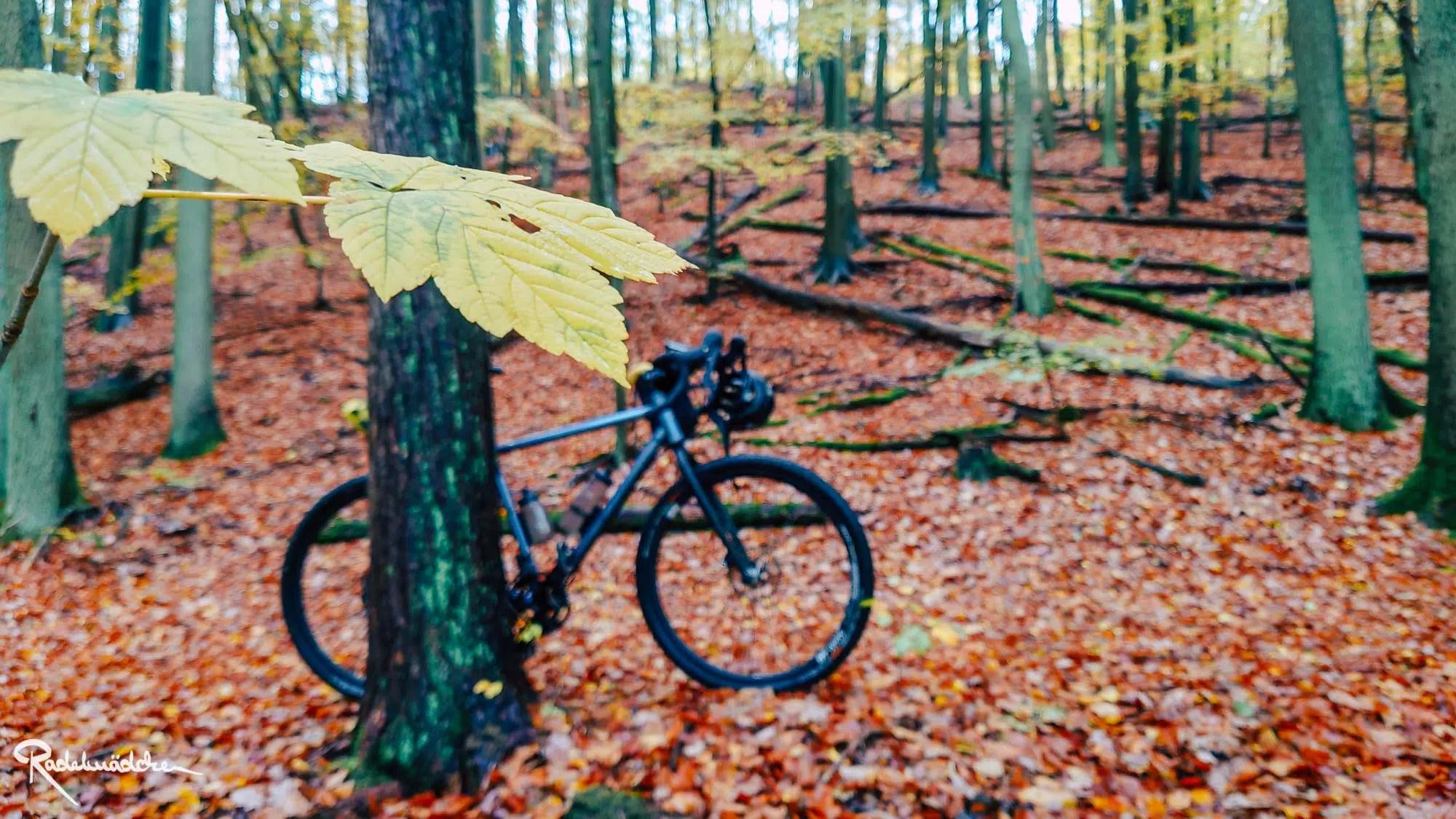 Blatt und Rad im Wald