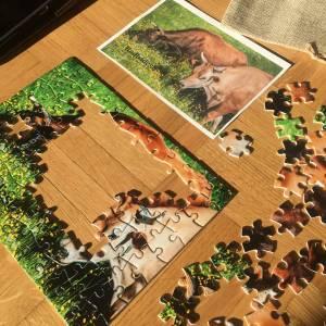 cows puzzle radhadesh