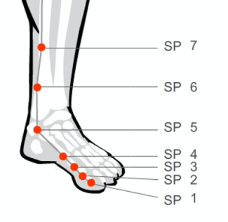 Spleen acupressure massage points of the foot and lower leg
