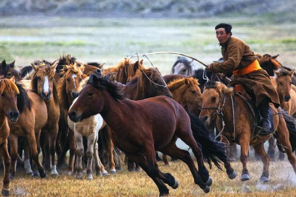 cavali della steppa