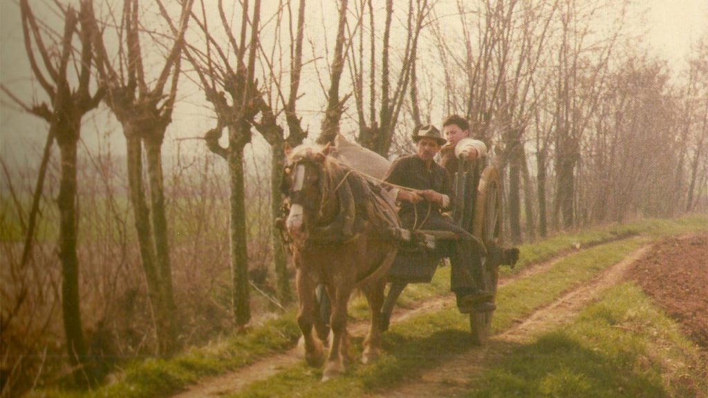 La campagna dell'albero degli zoccoli