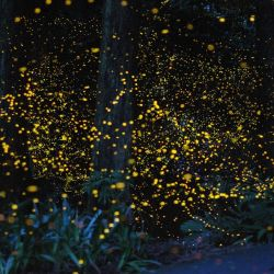 Fireflies and Lasers in Wuhan
