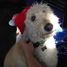 Awww, HarryWinston looks great in our new pom-pom #beanie. You would look even better in one after a $50 donation to Radio Boise's fund drive! Three ways to donate: Call (208) 258-2072, visit http://radioboise.us or stop by in person at 1020 W. Main St. in the basement! #radioboise #boise #idaho #communityradio #KRBXFallRadiothon