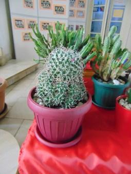 Catuşi şi plante suculente la Satu Mare