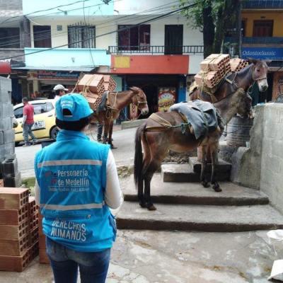 Las mulitas de Santo Domingo Savio en Medellín serán liberadas de la explotación este 17 de diciembre