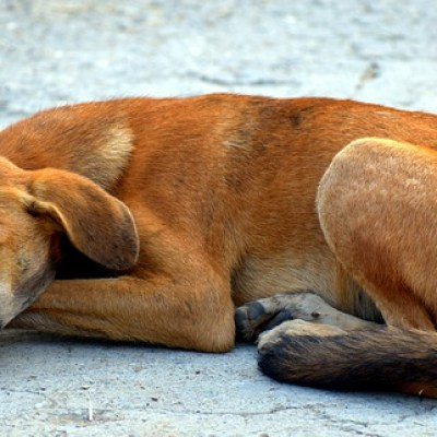 Conozca cuáles han sido las sanciones aplicadas por maltrato animal en Colombia según la Ley 1774