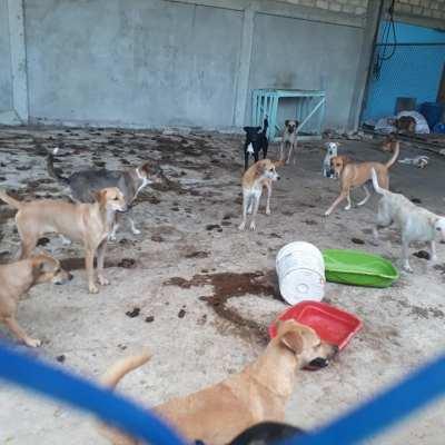 Denuncian maltrato animal en el Coso Municipal de San Andrés, los animales están muriendo de hambre