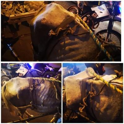 En Cali los caballos siguen siendo explotados halando carretillas, actualmente la responsabilidad recae sobre la Secretaría de Desarrollo Económico