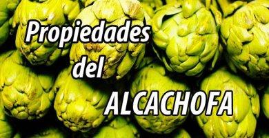 PROPIEDADES planta alcachofa