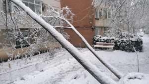 Doi copaci căzuți în mai puțin de 3 ore