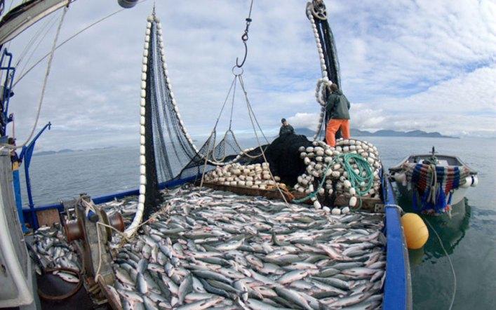 La lucha por la sardina y la anchoveta tiene movilizado a todo el sector pesquero artesanal: Es momento que los científicos y el gobierno se pongan del lado de los trabajadores marítimos dejando las mentiras de lado