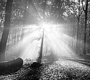 """""""Ausbreitungszone"""" Hörspiel über eine Widerstandsgruppe im Wald"""