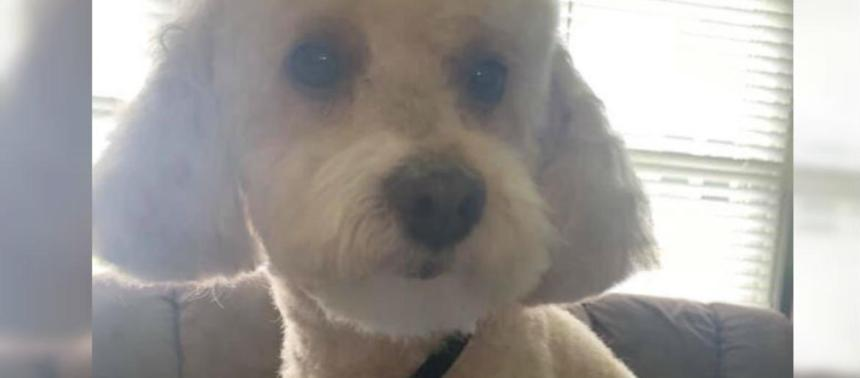 South Jersey police investigate a case of animal cruelty Untitled 227
