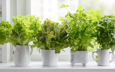 Health Benefits and Uses for Home-Grown Herbs