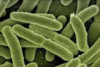 Coronavirus drug raises risk of grim death from fungal infection