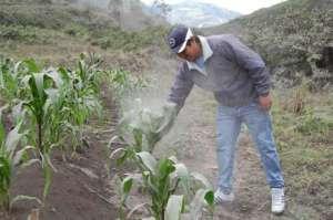 Caída de ceniza del Tungurahua afecta en escasez y en precios altos de los productos
