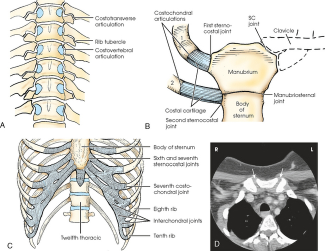 Sternoclavicular Joint Anatomy