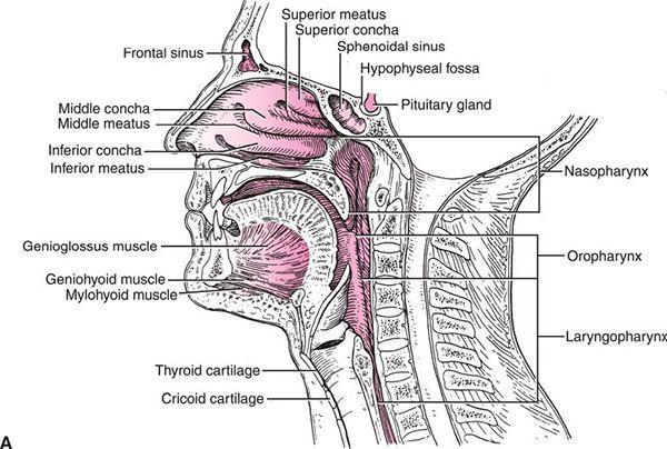 Oropharynx Radiology Key