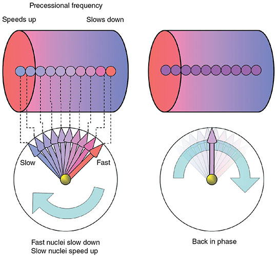 Diagrams show two cylinders labeled precessional frequency with speeds up on left and slows down on right. Two meters show fast nuclei slow down slow nuclei speed up and back in phase.