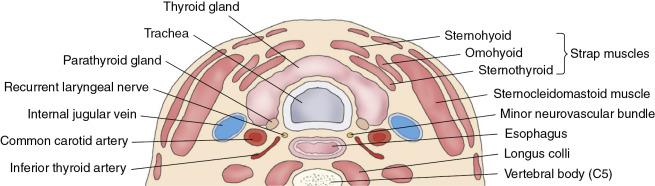 Thyroid And Parathyroid Glands Radiology Key