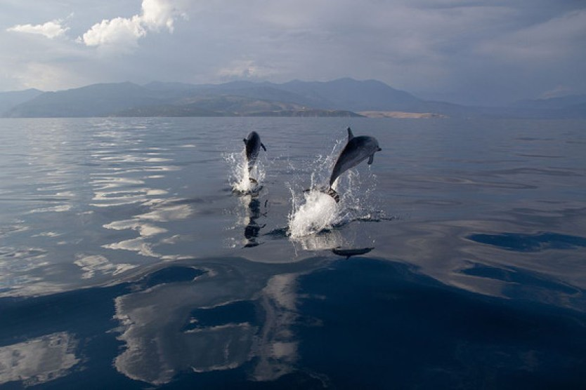 Delfines listados en aguas mediterráneas  / OceanCare
