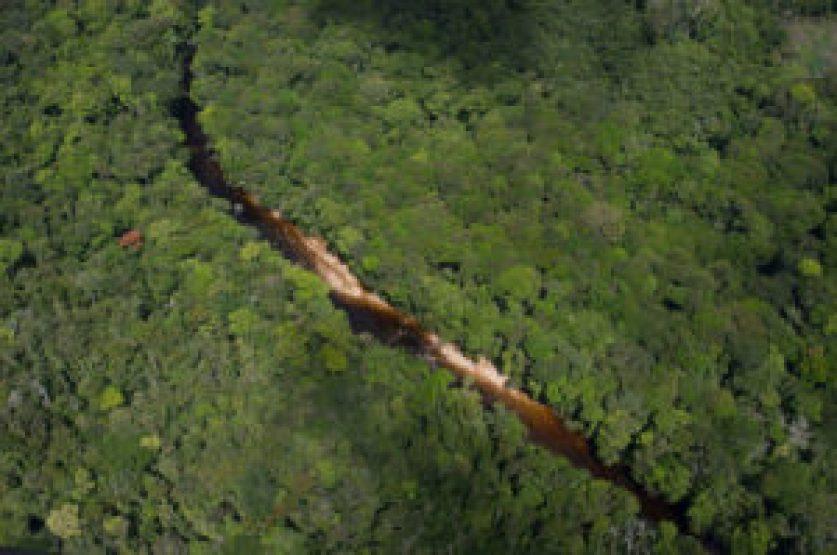 ¿Cuántas especies de plantas hay realmente en el Amazonas? - Cuantas-especies-de-plantas-hay-realmente-en-el-Amazonas_image_380-300x199
