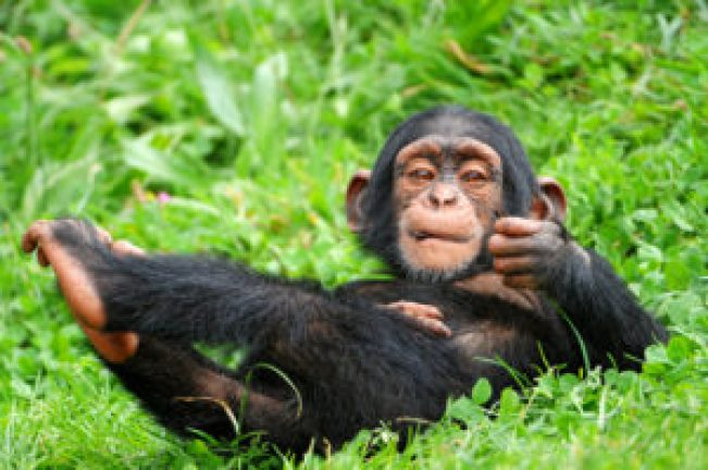 El cerebro es lo que más diferencia a los humanos del resto de primates - El-cerebro-es-lo-que-mas-diferencia-a-los-humanos-del-resto-de-primates_image_380-300x199