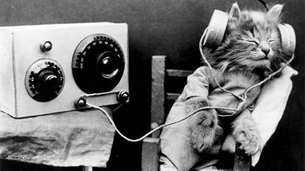 audio-kitteh
