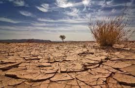 """مشاركة تونس في قمة المناخ كانت 'دون المأمول"""""""