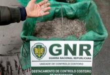 Quatro quilos de meixão apreendidos em Vila do Conde