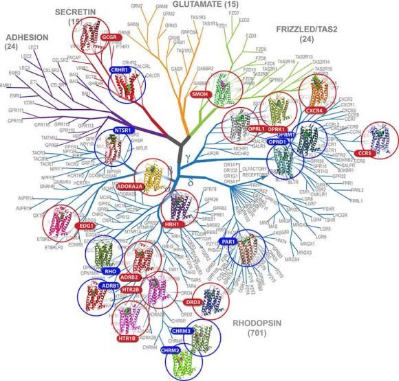 Por las ramas de la evolución