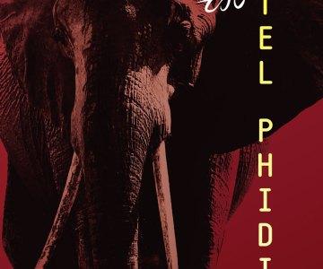 RadioPointtsapakidis-elefantas