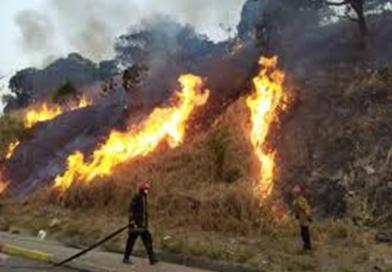 Alarmante ola de incendios forestales en Guarenas Guatire. -CEMAG- fija su posición.