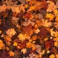 fall-foliage-111315_640