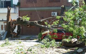 Voiture brisée par la chute d'un arbre