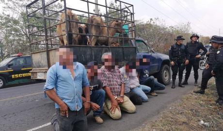 Banda de cuatreros habría asesinado a guardián para robar 21 semovientes