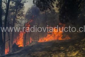 MELIPEUCO: Incendio forestal