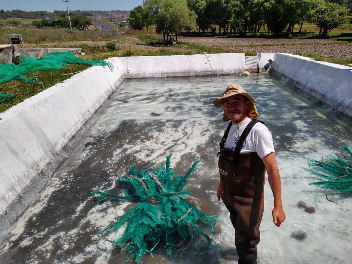 PRODUCEN MUNICIPIOS MEXIQUENSES MÁS DE 37 MILLONES DE CRÍAS ACUÍCOLAS AL AÑO